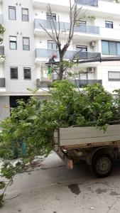 albero via Puccini